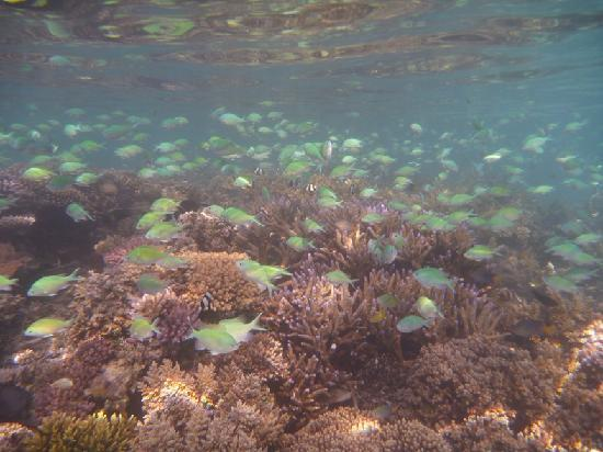 Nanuya, Fiji: Massive array of fish and coral just off the beach!