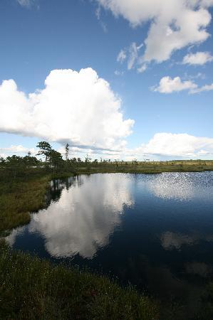 Wilderness Experiences in Soomaa National Park: Soomaa bog lake