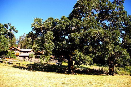 Kenwood Oaks Guest House : Location by the oaks