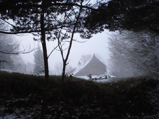 Llundain Fach Little London: House from the woods, winter's morning