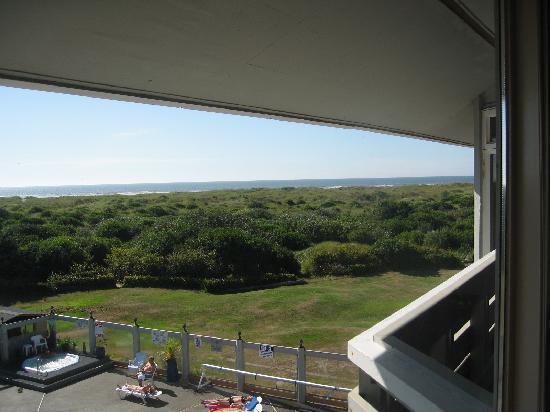 Grey Gull: View
