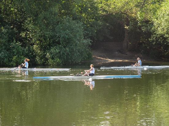 Red Lion: Rowers passing by