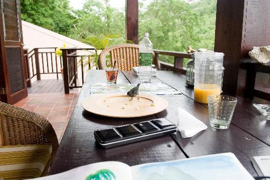 Villa Pomme d'Amour : les oiseaux de la terrasse