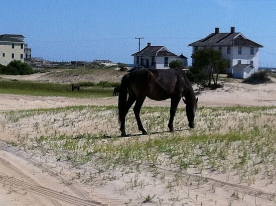 Back Country Safari Tours: one of the many horses we saw