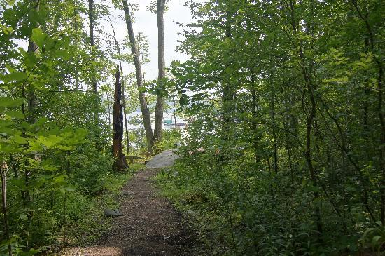 Good Timber Bed and Breakfast: Path to the dock.  Bears climbing a tree on the left!
