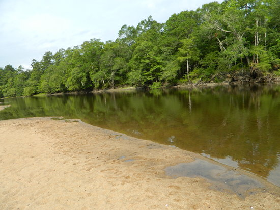 Givhans Ferry State Park (Ridgeville)   All You Need To Know Before You Go  (with Photos)   TripAdvisor