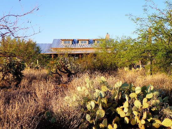 Desert Dove Bed and Breakfast : The garden of Desert Dove