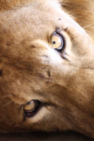 Tunis, Tunesien: zoo du belvédère