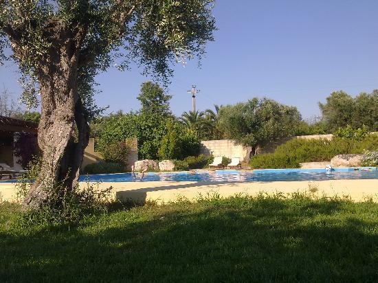 Masseria Mosca: La piscina tra gli olivi