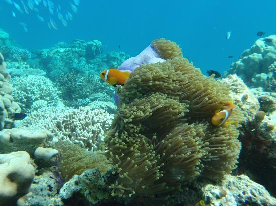 Hakuraa Island: more snorkelling pics