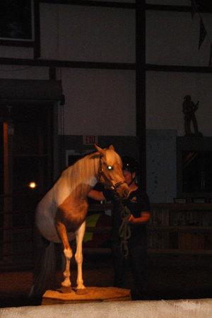 Chincoteague Pony Centre : Teaguer