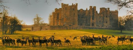 Darlington, UK: Deer at Raby Castle