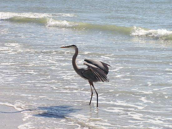 Caddy's on the Beach: DON'T FEED THE BIRDS