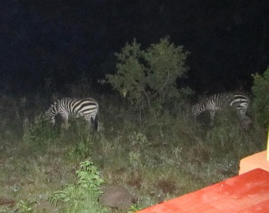 Mara West Camp: zebras at night - from our deck
