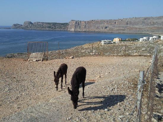 Lindos Sun Hotel: the donkeys on way to lindos town