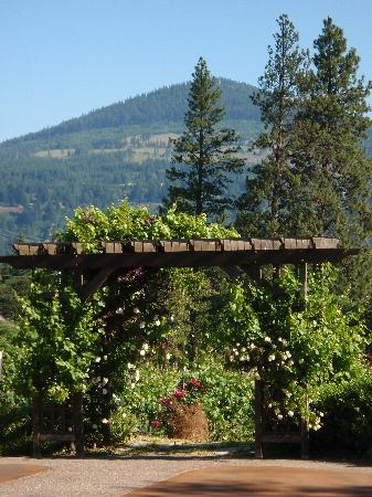 Vineyard View Bed & Breakfast: Beautiful grounds with a great view