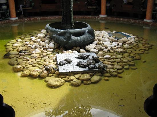 Iberostar Costa Dorada : A little pond in reception
