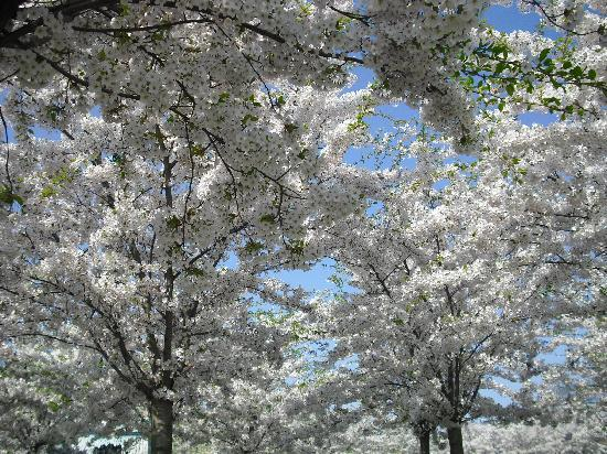 Copenhague, Dinamarca: primavera con la sirenetta