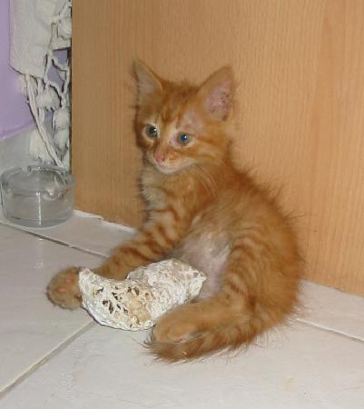 Holistic Heaven: Oscar kitten - a rescued fellow with a broken leg - bless him