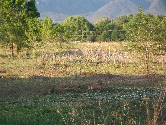 Orinda Bed and Breakfast: Open field to the north/east, can you see all the prairie dogs?