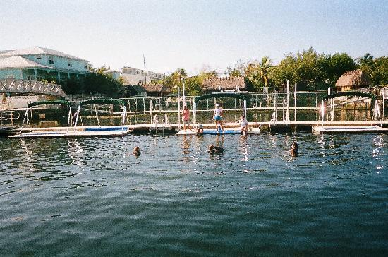 Dolphins Plus - Key Largo: The swimming hole at Dolphins Plus