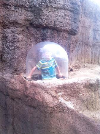 Houston Zoo: near children area