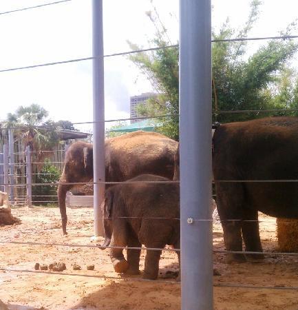 Houston Zoo: elephants