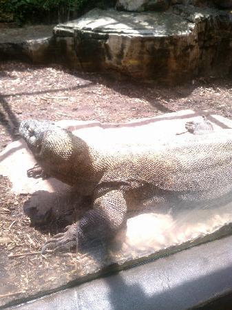 Houston Zoo: reptile area