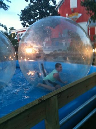 Village of Baytowne Wharf: Hamster ball