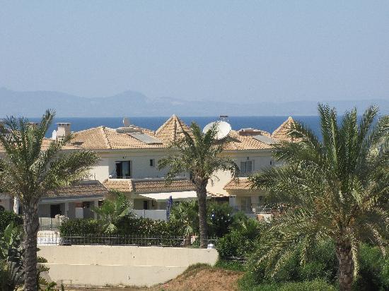 Malama Beach Holiday Village : palm tree