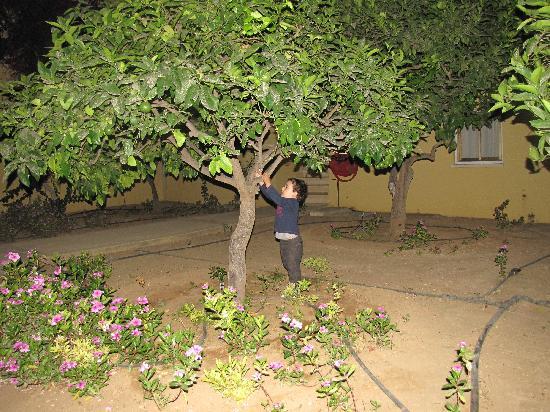 Malama Beach Holiday Village : small lemon tree