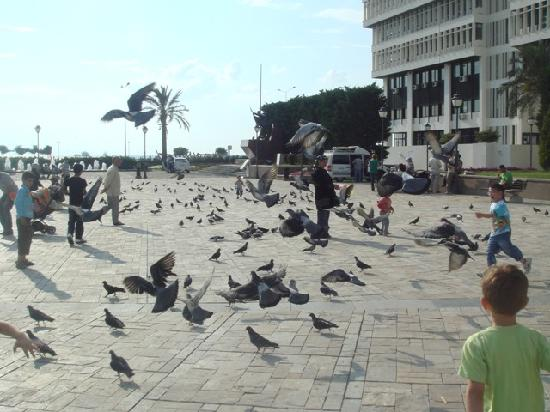 Saat Kulesi (Clock Tower): Play with pigeons...