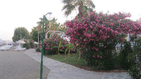Club Muskebi: allée fleurie accedant à la plage