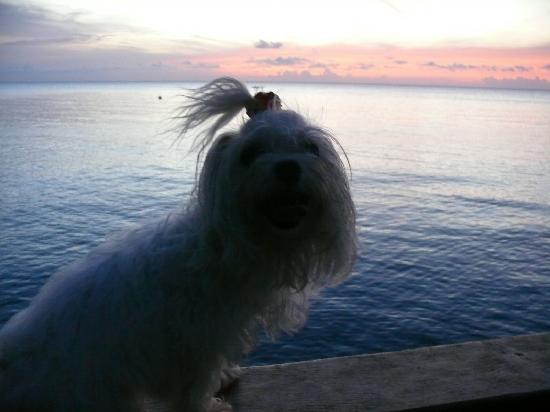 Panama Divers PADI Dive Resort: ELLA TAMBIEN ESTA FELIZ