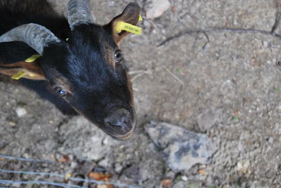 La Porte d'Arcy : Les petits animaux sympa