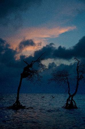 Tarpon Caye Belize: two trees,two birds-sunset