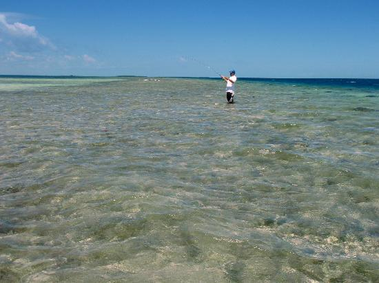 Tarpon Caye Belize: try to beat this