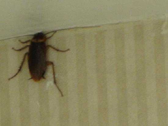 Bed Bugs In Cincinnati Ohio Hotels