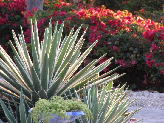 Melia Cayo Santa Maria: Que de beaux jardins de fleurs