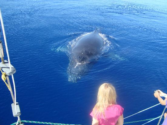 Sandy Beach Resort: The whales!