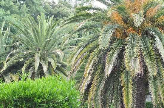 Campanile Cannes Ouest - Mandelieu: Au milieu des palmiers