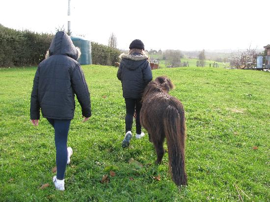 Waitomo Big Bird Bed & Breakfast: Our girls adopted pony 'Trixie'
