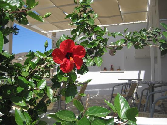 Hotel Helena : Flower