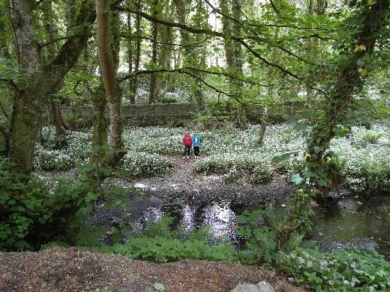 Hook Head Safaris: Beautiful brook behind Tintern Abbey