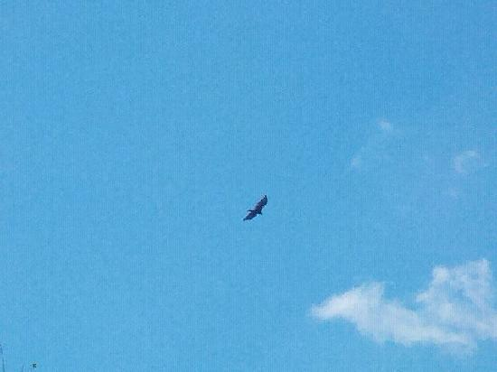Kempton, PA: Hawk at Hawk Mtn