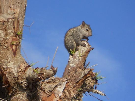 Barcelo Maya Caribe: scoiattolo