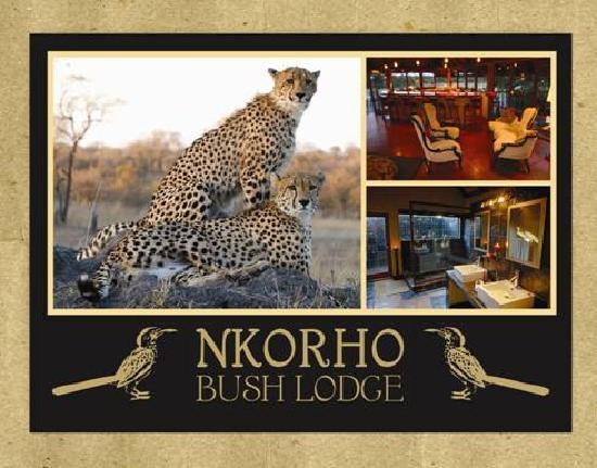 نكورهو بوش لودج: Nkorho Bush Lodge at it's best !!!