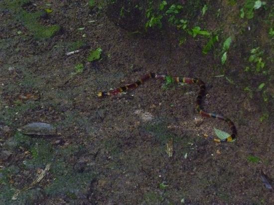 San Carlos, Kostaryka: snakes