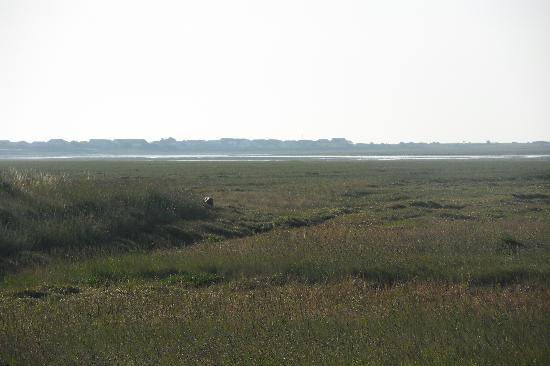 The Jolly Fisherman: Five mins away Pagham harbour nature reserve