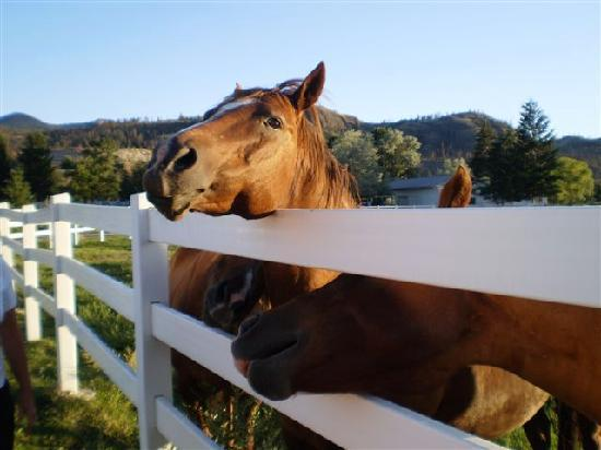 South Thompson Inn & Conference Center: feeding the horses